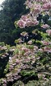 木本花卉:002.jpg