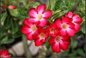 木本花卉:0068.jpg