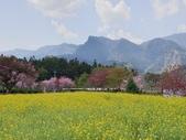 旅遊景點:草坪頭玉山觀光茶園