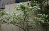 木本花卉:001.jpg