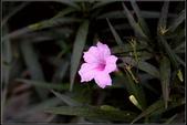 草花植物:0009.jpg