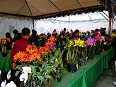 2013台南公園蘭花展:IMG_0892.JPG-1.jpg