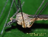 大蚊:DSC_8984