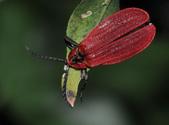 其他目---昆蟲:DSC_4391