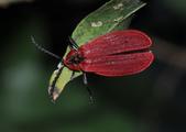其他目---昆蟲:DSC_4392
