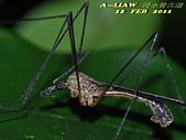 大蚊:DSC_8986