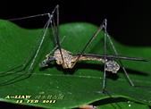 大蚊:DSC_8982