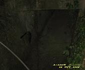 飛禽走獸:台灣葉鼻蝠IMG_8196