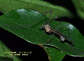 大蚊:DSC_8975