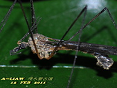 大蚊:DSC_8976