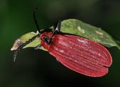 其他目---昆蟲:DSC_4394
