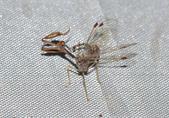 其他目---昆蟲:DSC_1161