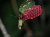 其他目---昆蟲:DSC_4389