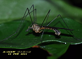 大蚊:DSC_8977