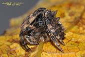蜘蛛:DSC_3741