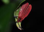 其他目---昆蟲:DSC_4393