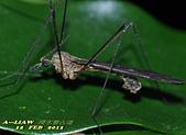 大蚊:DSC_8985