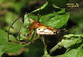 蜘蛛:IMG_6475