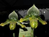 2013台南公園蘭花展:IMG_0851.JPG-1
