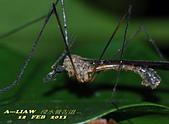 大蚊:DSC_8980