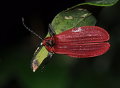 其他目---昆蟲:DSC_4390