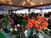 2013台南公園蘭花展:IMG_0896.JPG-1.jpg
