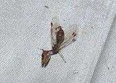 其他目---昆蟲:DSC_1156