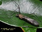 大蚊:DSC_8978
