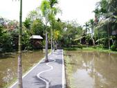 峇里島-髒鴨子餐廳:P1210294.jpg