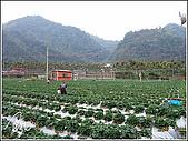 大湖草莓:188