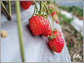 大湖草莓:191