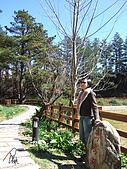 中橫之旅:福壽山農場-鴛鴦湖