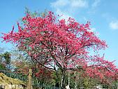 中橫之旅:青青草原唯一的櫻花