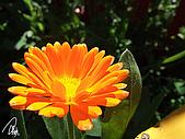 中橫之旅:明秀農場外面的花兒