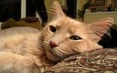 大千世界:個性十足的寵物貓咪-2