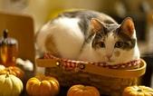 大千世界:個性十足的寵物貓咪-3