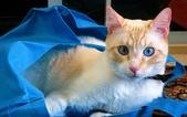 大千世界:個性十足的寵物貓咪-6
