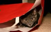 大千世界:個性十足的寵物貓咪-7