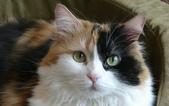 大千世界:個性十足的寵物貓咪-8