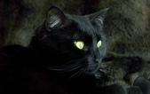 大千世界:個性十足的寵物貓咪-9