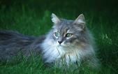 大千世界:個性十足的寵物貓咪-10