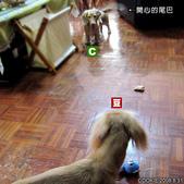 Cookie交朋友:想要小藍熊