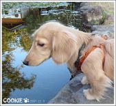 台灣趴趴走:池塘驚魂記ㄧ