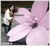 台灣趴趴走:這是蝦米花?