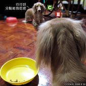 Cookie交朋友:求食