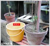 初來乍到小時後:肥皂水滅蚊法