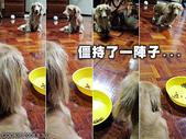 Cookie交朋友:想吃