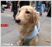 台灣趴趴走:膽小Cookie連環拍
