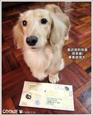 好康訊息:很多狗試吃包