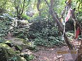 大屯溪古道 2011-2-7:IMG_8165.JPG